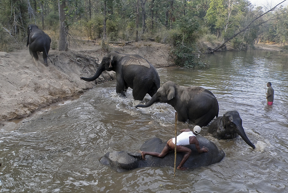 Bandhavgarh Elefanttvätt