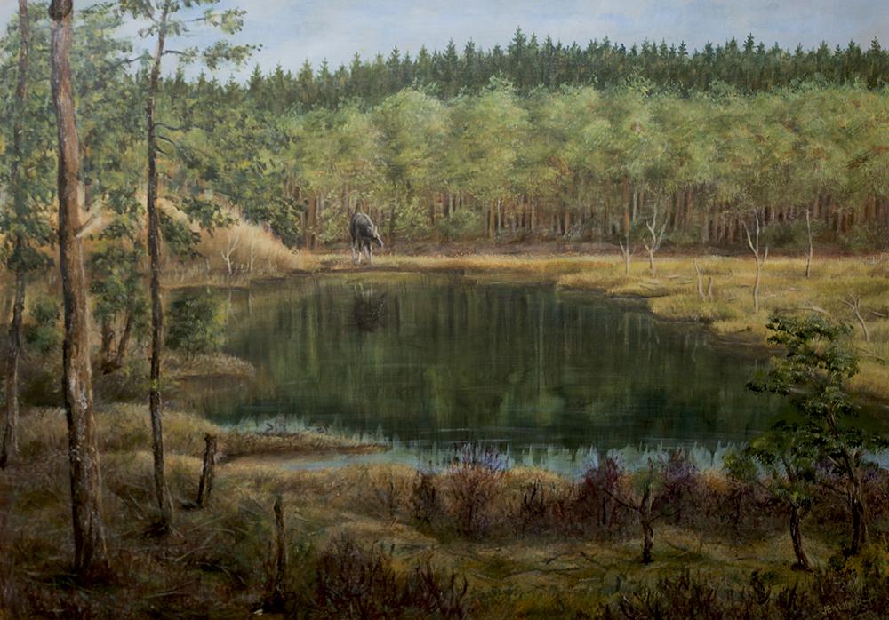 Älg vid skogstjärn, 2016