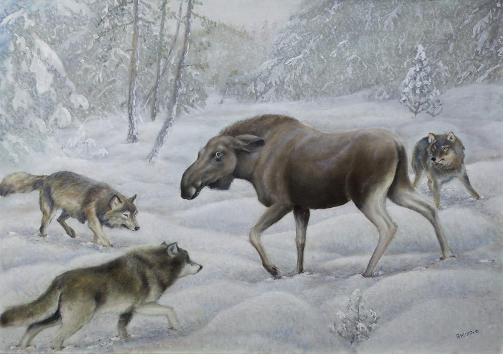 Älg och vargar, 2010