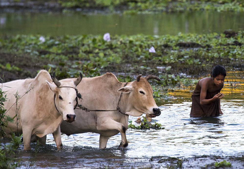 Majuli Indien