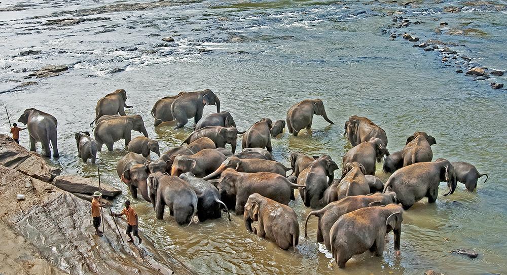 Sri Lanka: Elefanter